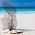 Caraibi le vacanze che tutti sognano