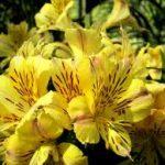 Alla scoperta dei fiori californiani: ecco cosa sono e come si usano