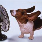 Startegie anti-caldo per la vostra casa
