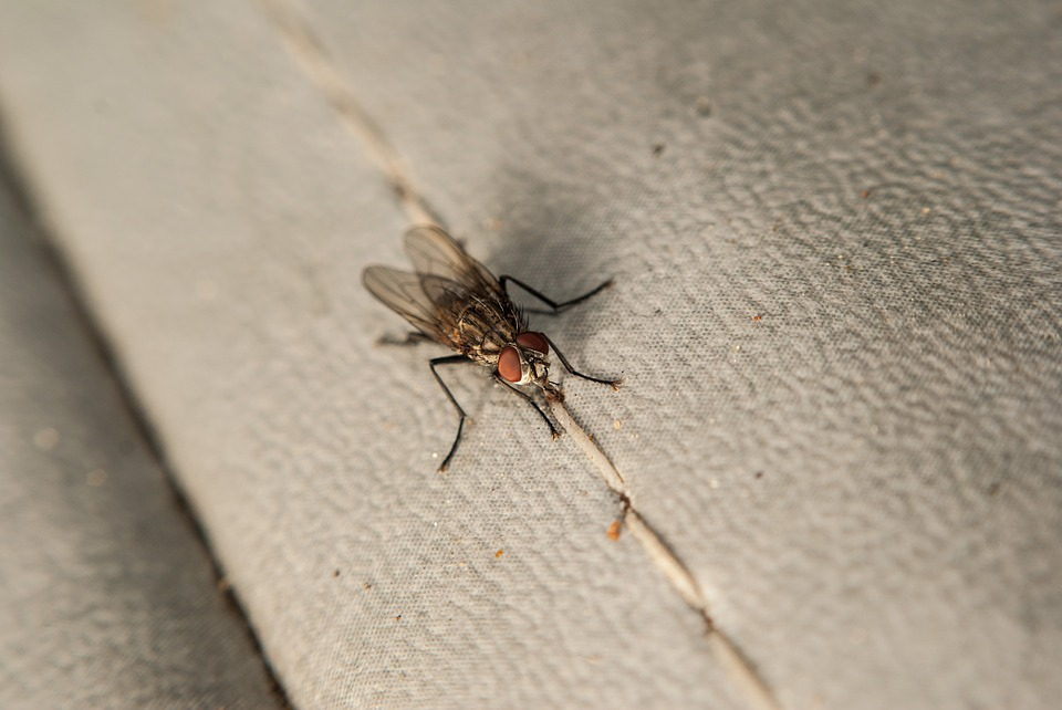 insetti-casa