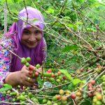 Benefici del caffè Verde