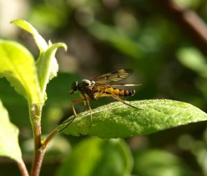 insect-346249_960_720